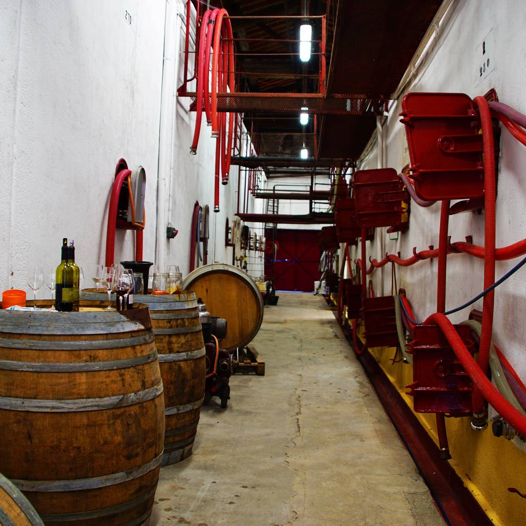 - Jolly Wine: visit and tasting