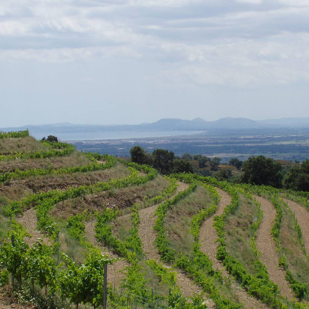 - Guided tour of the vineyards and tasting in the winery
