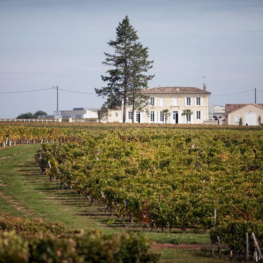 De la vigne au verre en passant par les chais