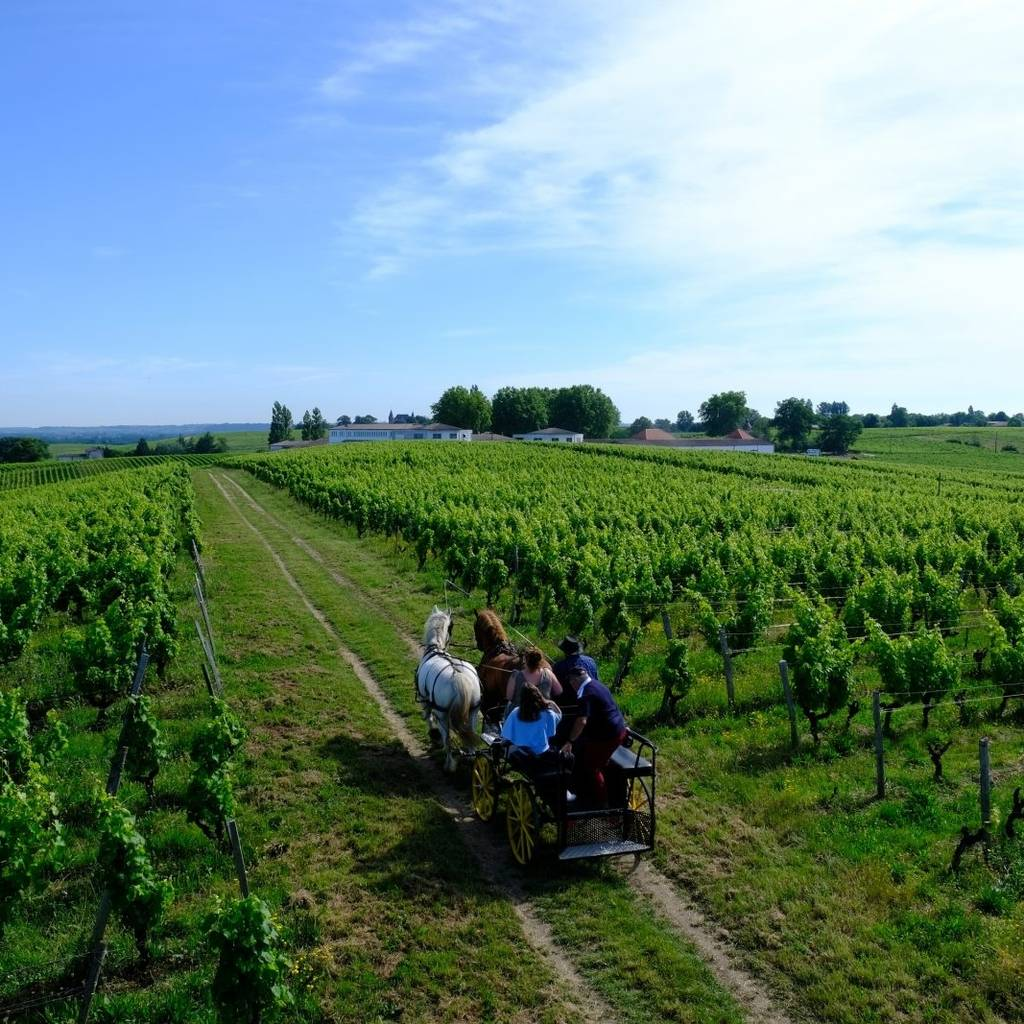 Carriage ride through Sauternes