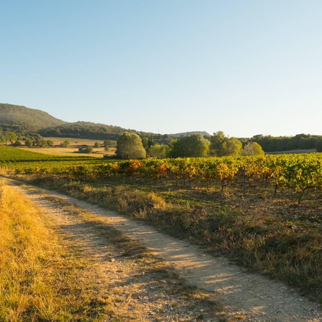 Caminata didáctica autoguiada: a través de las variedades de uva