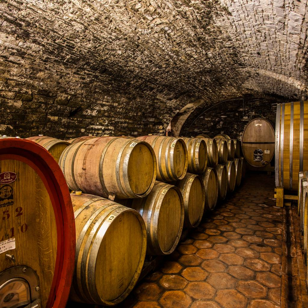 - Guided tour & Wine Tasting