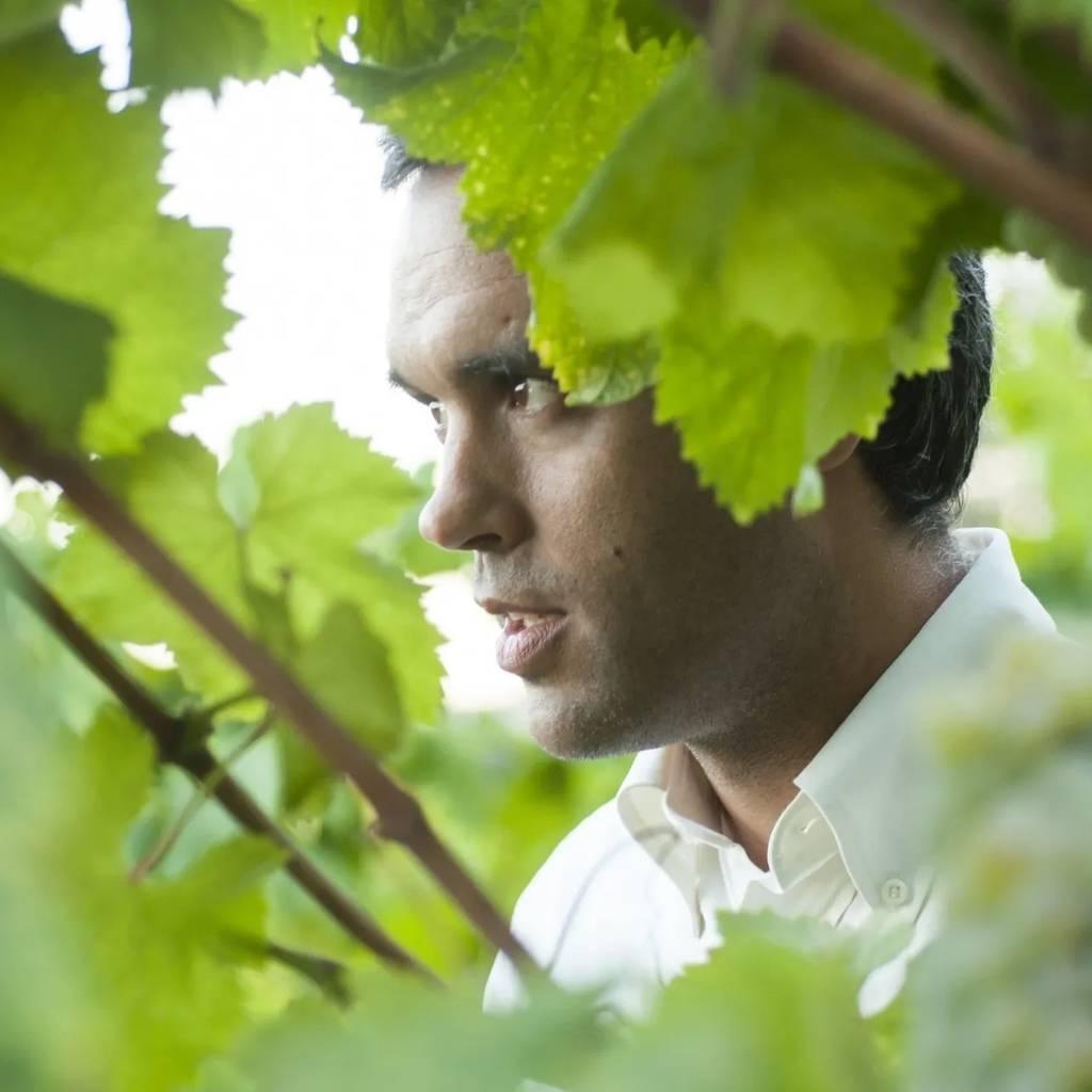 Sem Igual Vinho Verde: visita e degustação