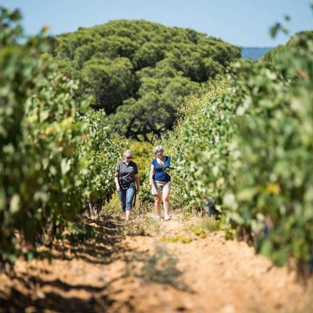 Balade dans les vignes avec la vigneronne