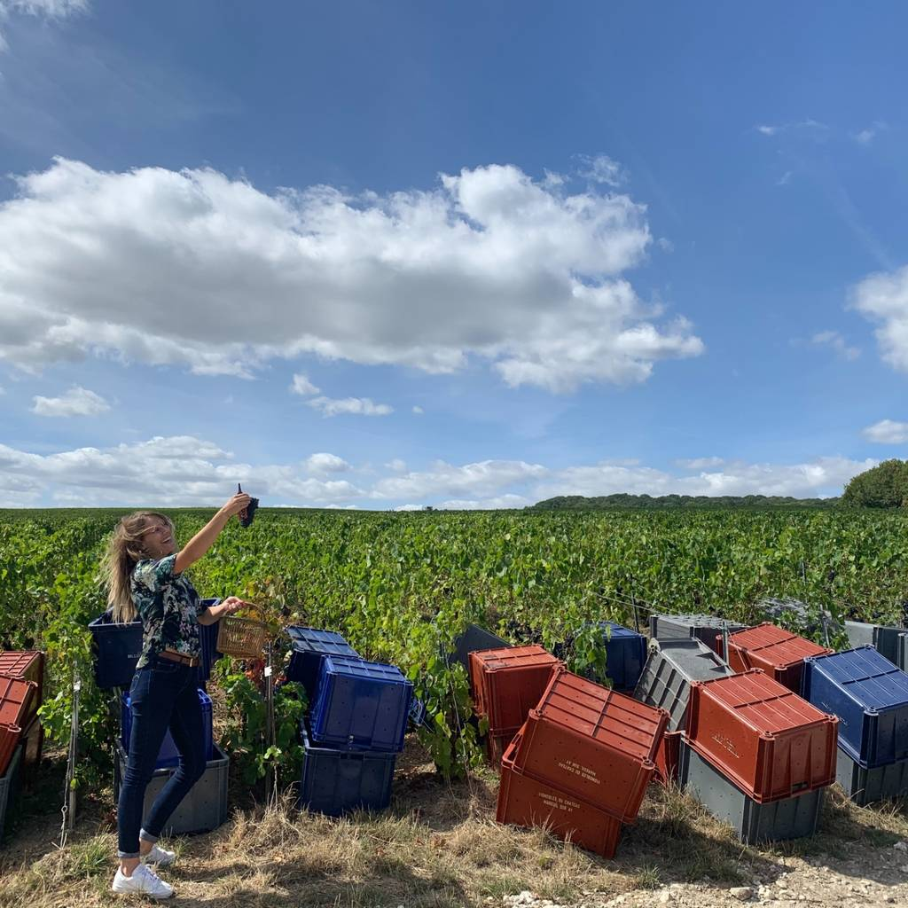 The Champagne of Connoisseurs during Harvest