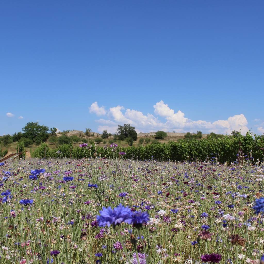 - Visite de l'espace de biodiversité et Dégustation