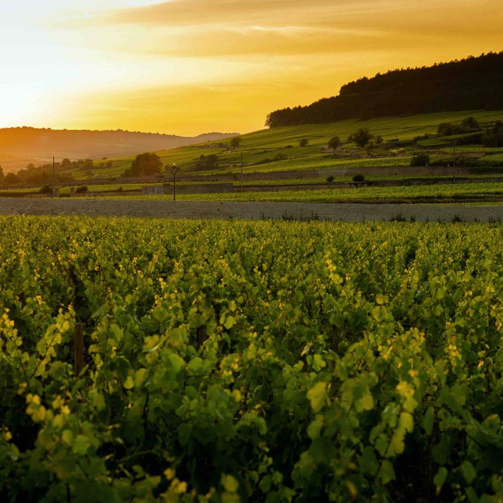 A Taste of La Route des Grands Crus