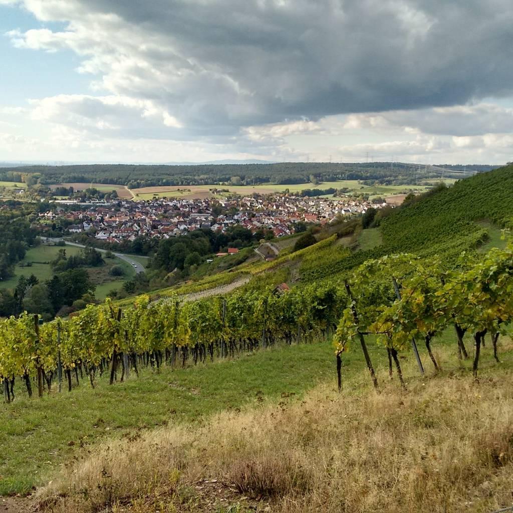 Vineyard Walk & Winery Visit in Franken Region