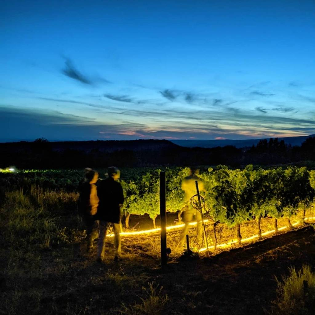Vignes et Lumières, the unique experience of an outdoor immersive tour between vines and stars