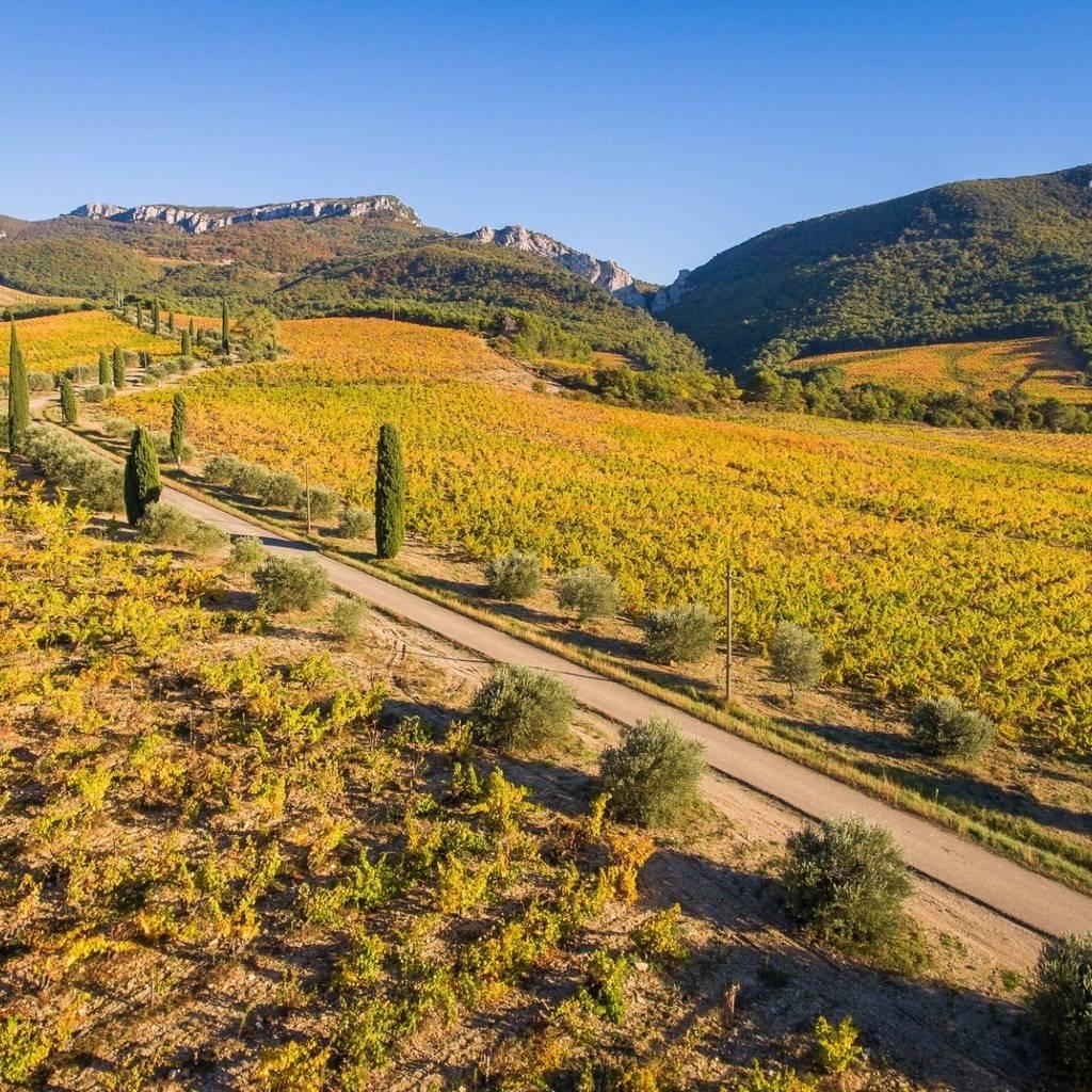 25 septembre - Balade culturelle au sein du vignoble et dégustation