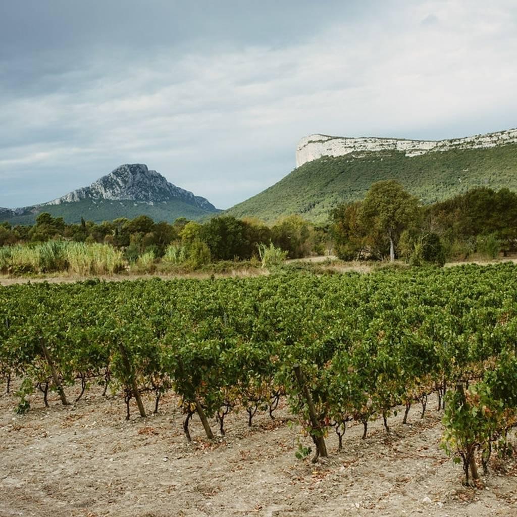Pic Saint Loup winetour
