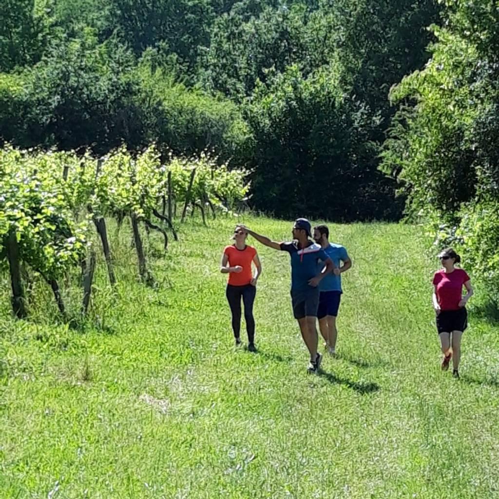 Run Into the wine, the wine running trail