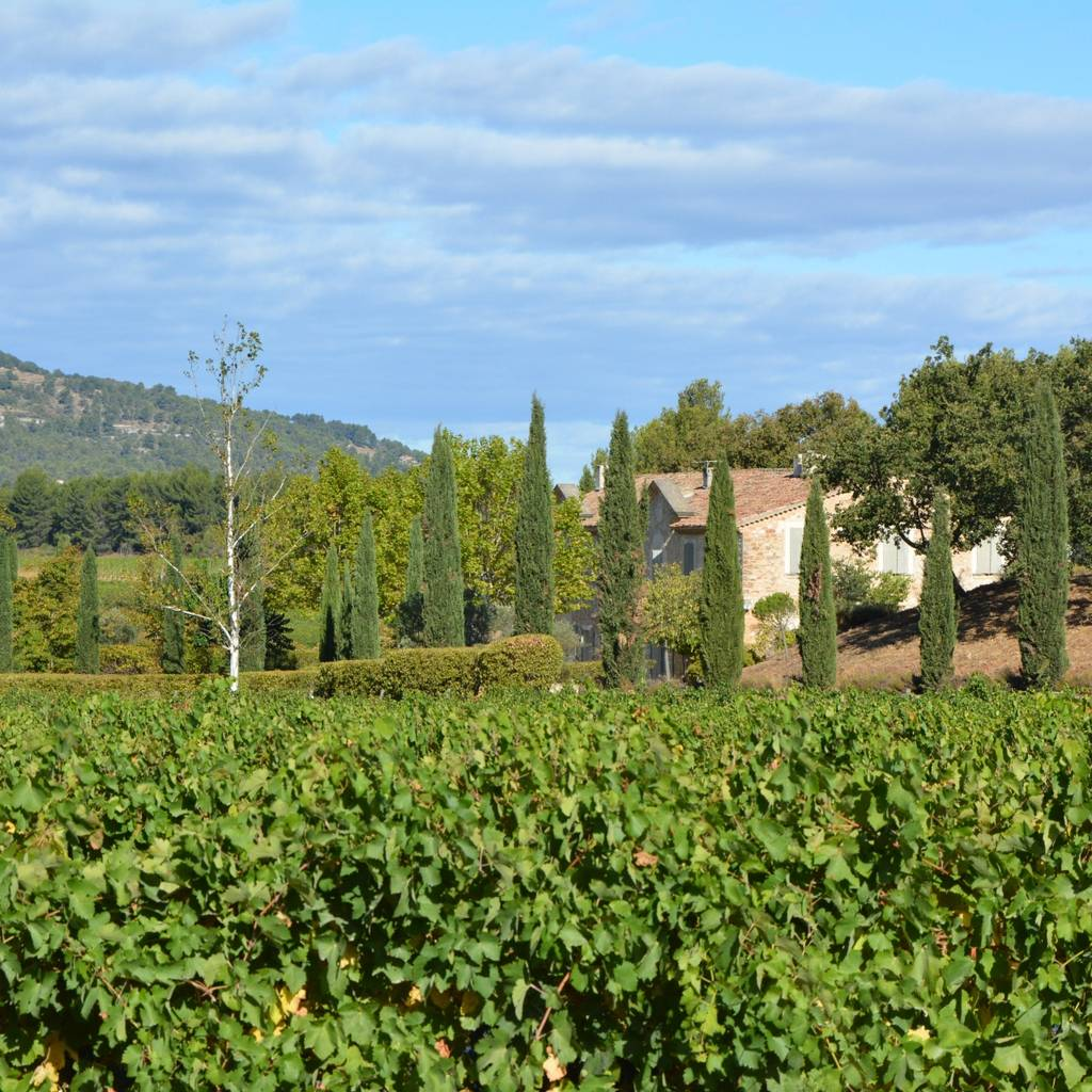 Provence Wine Discovery