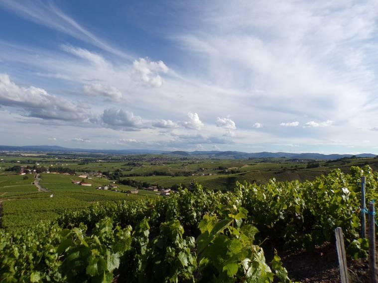 - Beaubourg Wine Tour