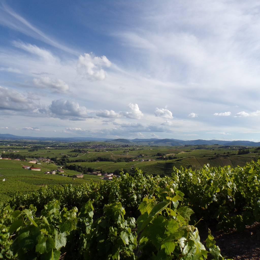 - Beaujolais Wine Tour