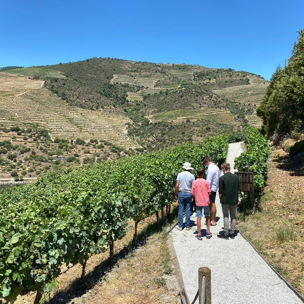 - Douro Valley Small Group Tour: Wine Tasting, Cruise and Lunch