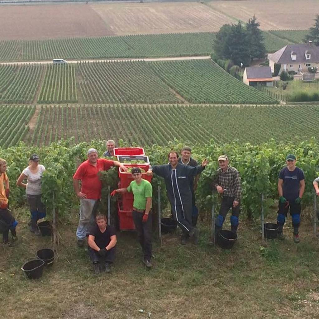 - August 28th to 31st - Harvests Experience in Champagne