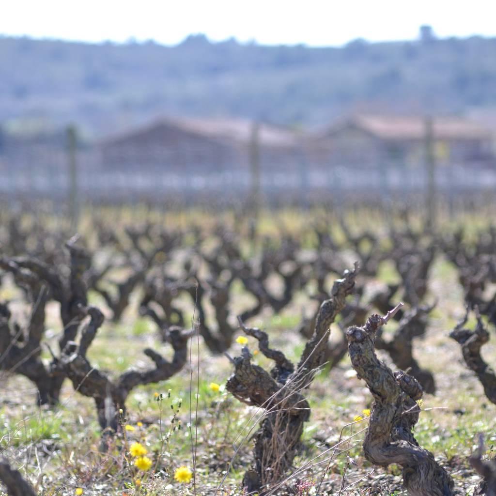 - MP180: cata de vino y aceite de oliva