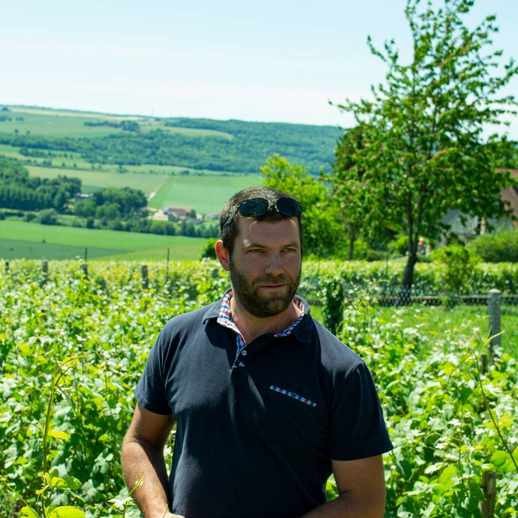 In the footsteps of a winegrower