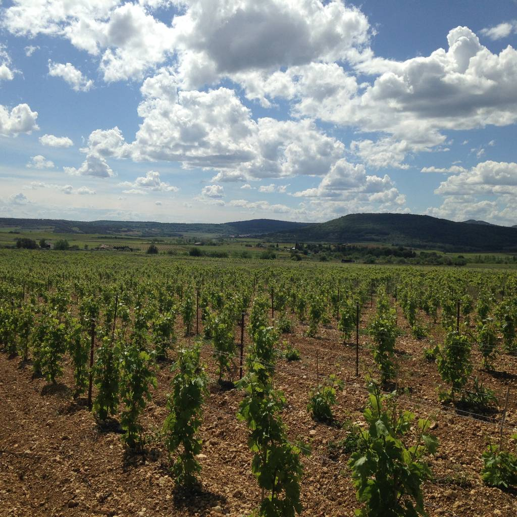 - Discovery of winemaking and tasting of our vintages