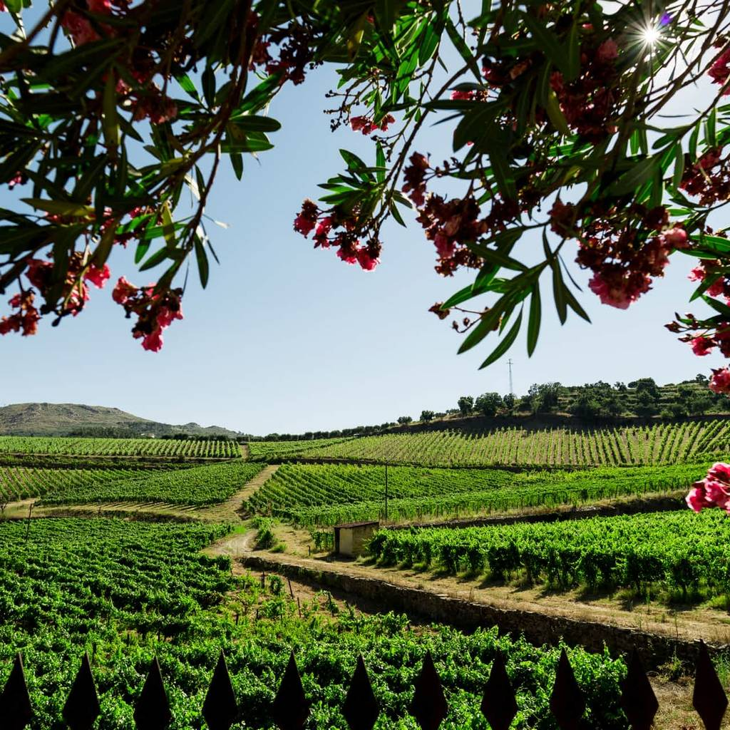 - Visite et dégustation de vins Premium