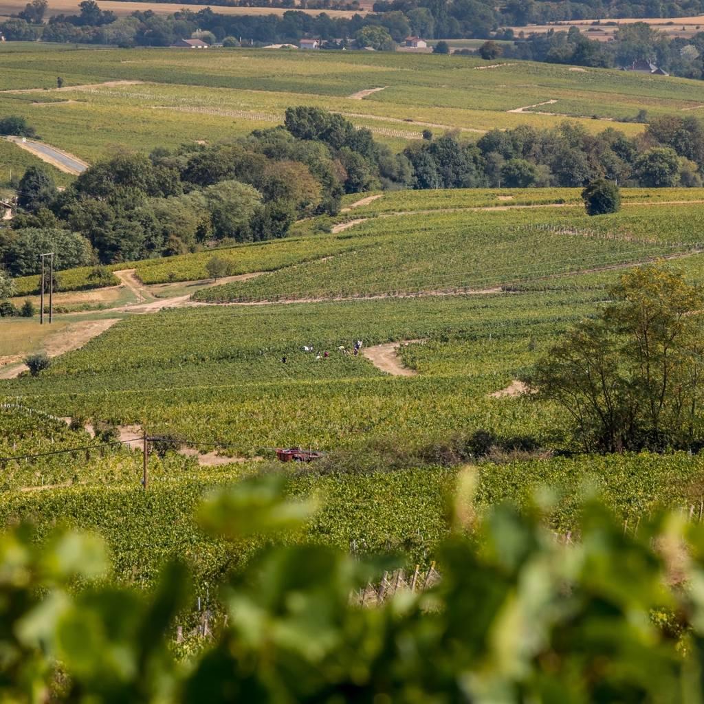 Ontdekking van de wijngaard met proeverij