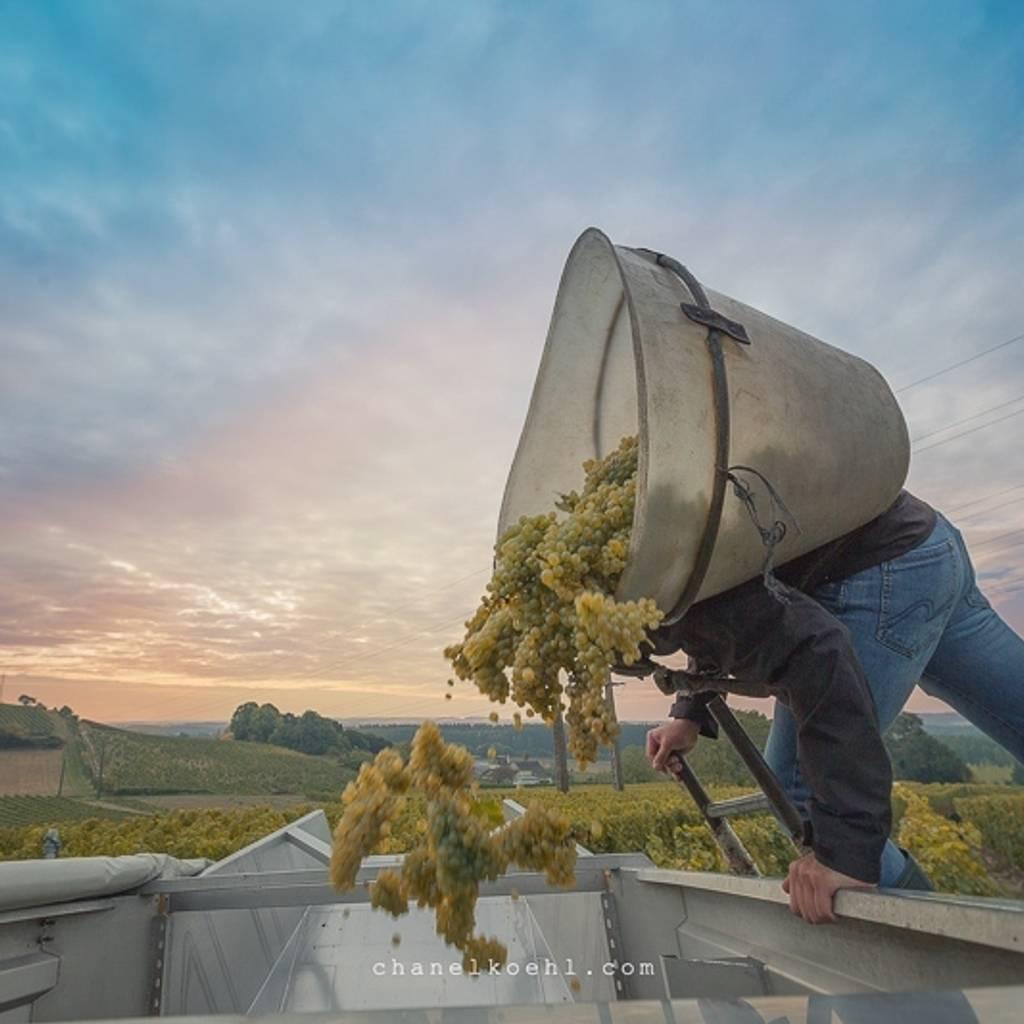 26 septembre - Une journée Vendanges dans la Loire