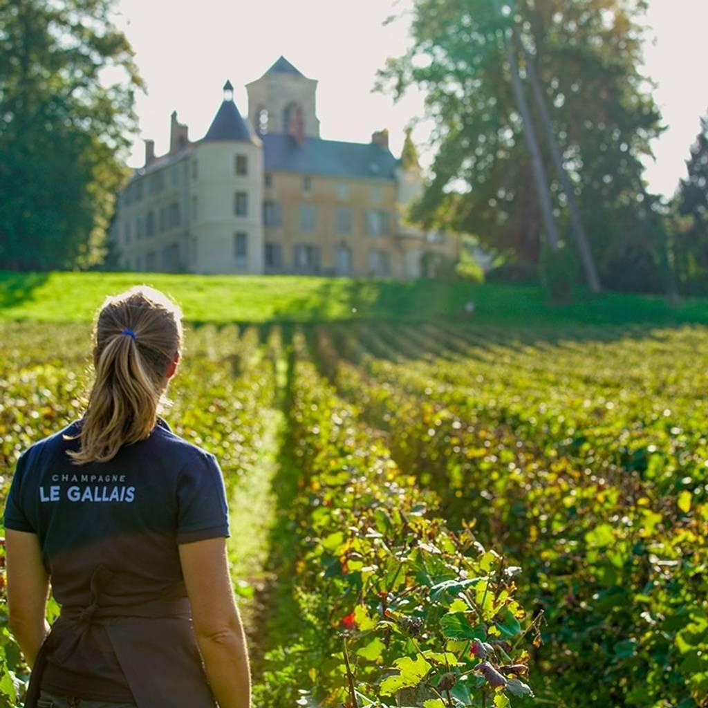 Visite au cœur du Clos du Château de Boursault et dégustation de 3 cuvées