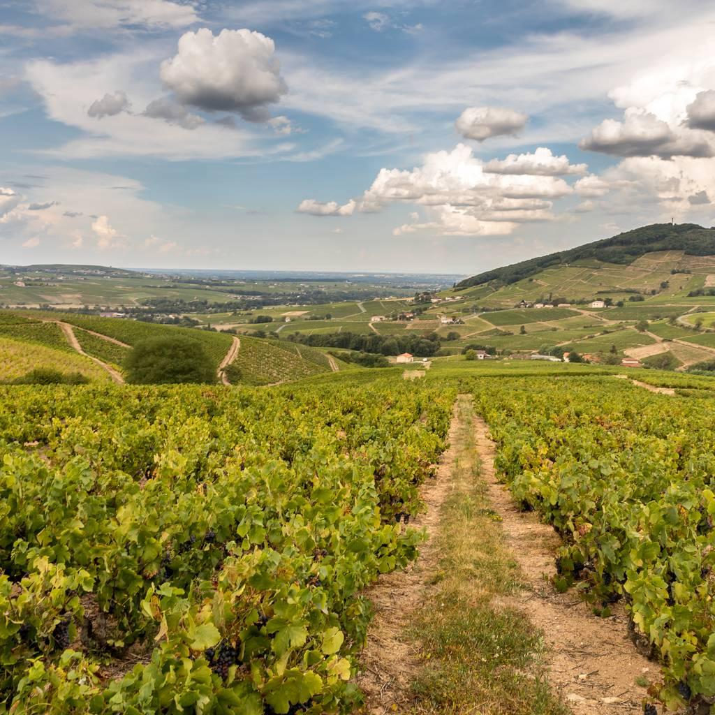 - Ontdekking van de wijngaard met proeverij