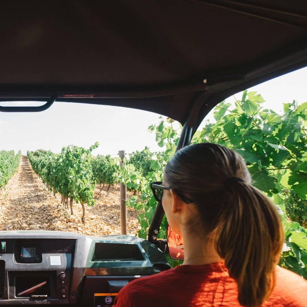 - Wine Safari