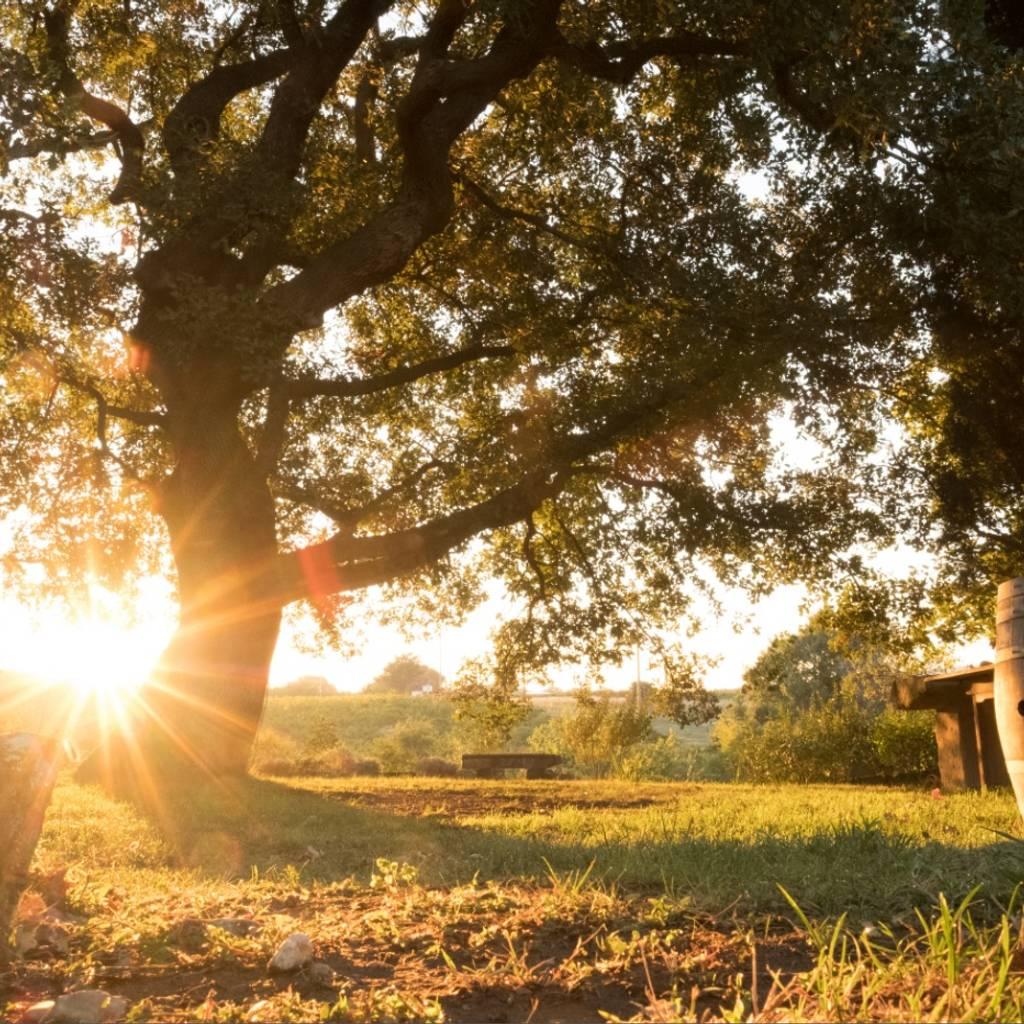 - Caminata didáctica autoguiada: a través de las variedades de uva