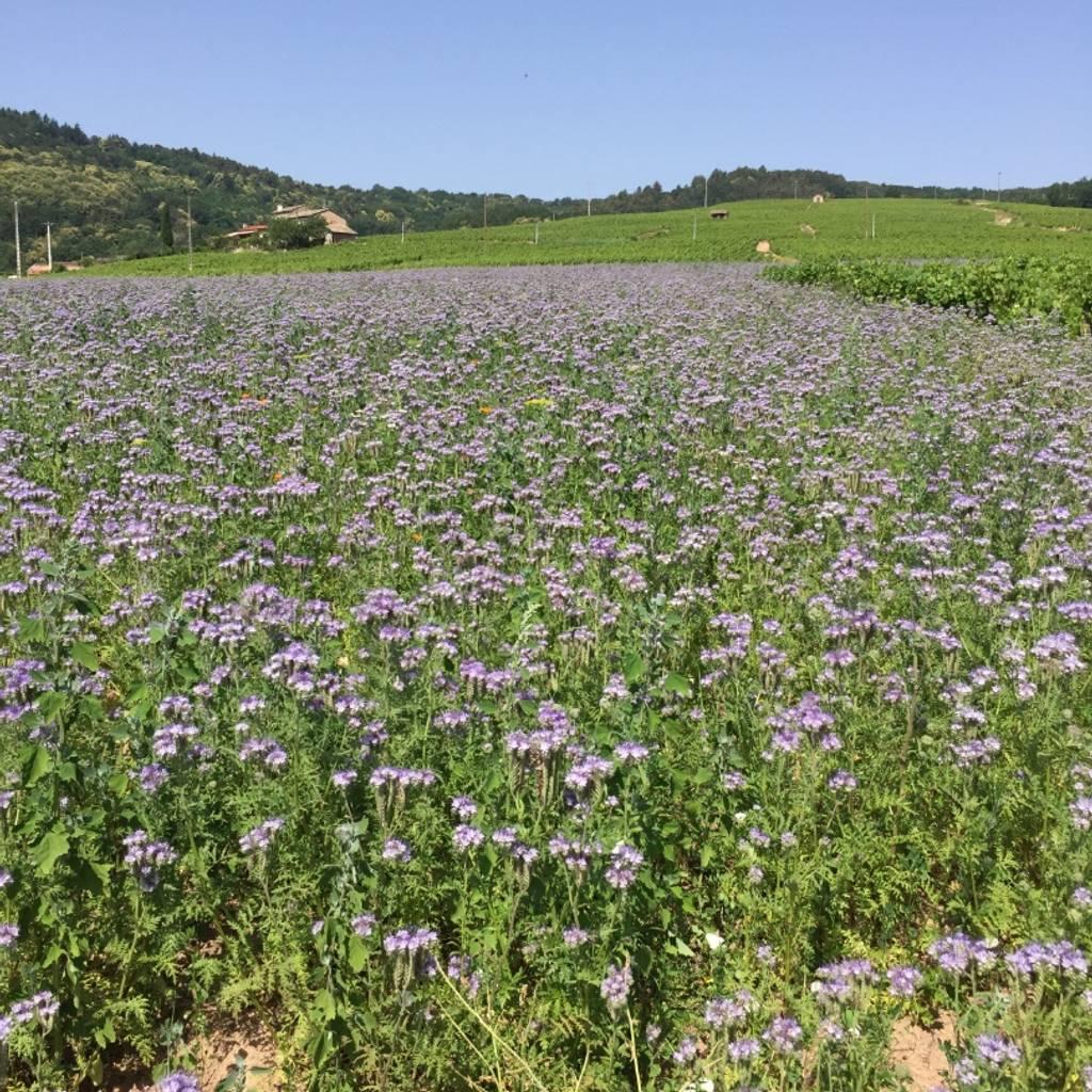 Il était une fois la biodynamie dans les vignes
