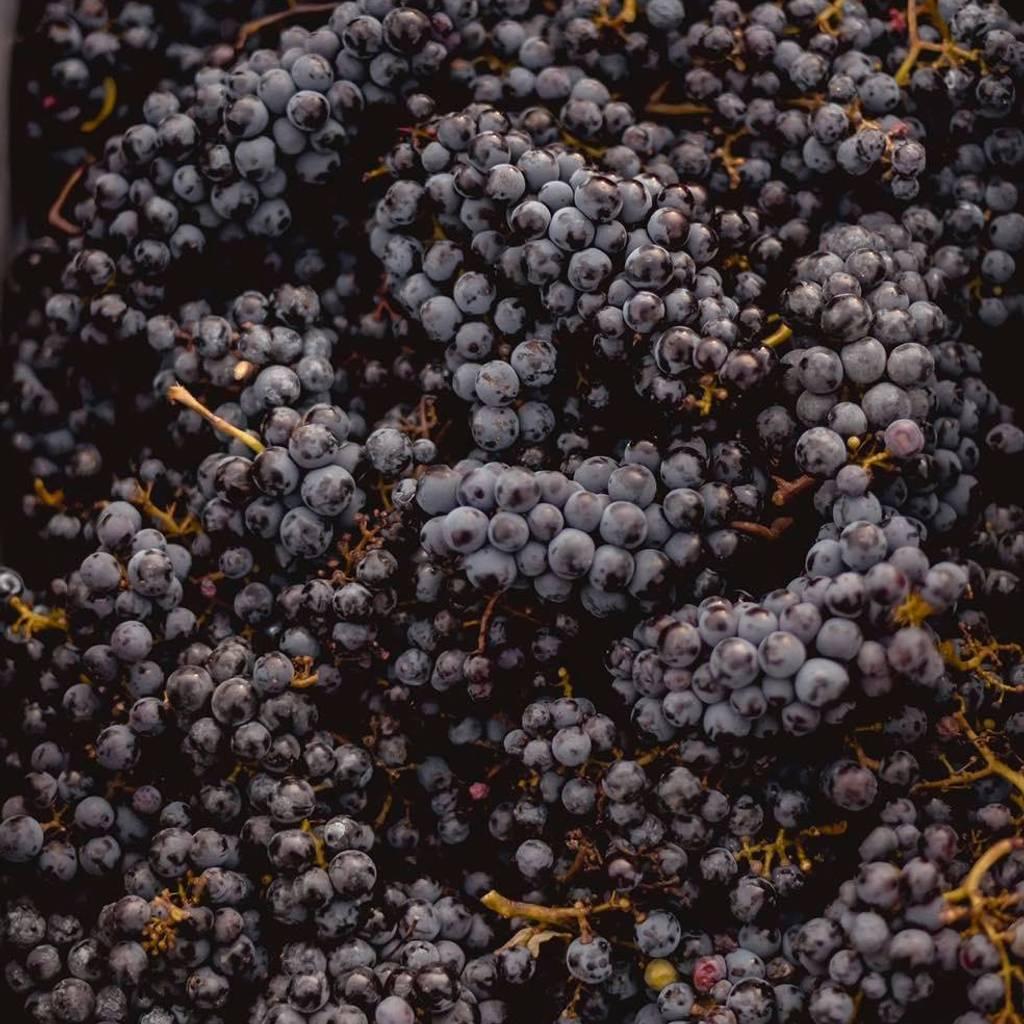 - Les travaux de la vigne