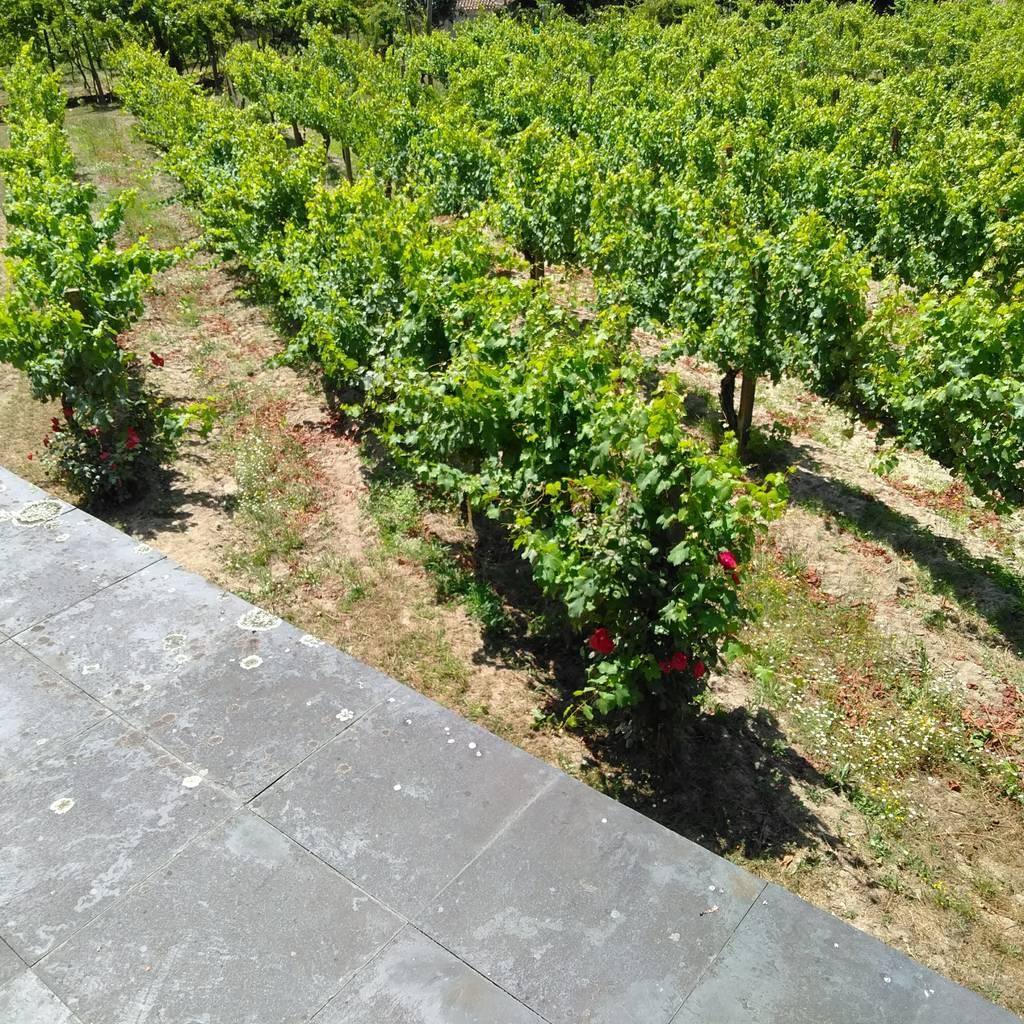 - Vinresa och provsmakning på Quinta de Sanjoanne