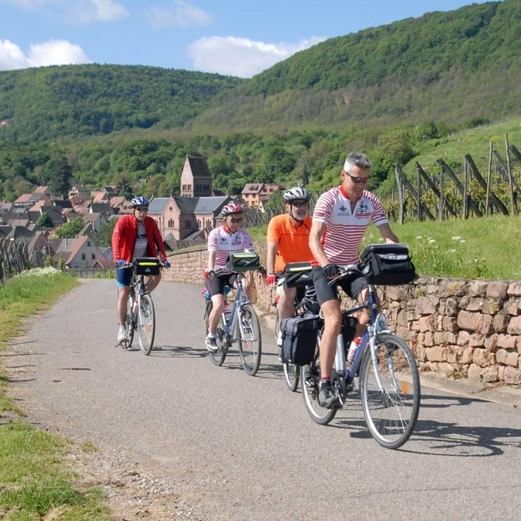 在葡萄园骑电动自行车并品尝