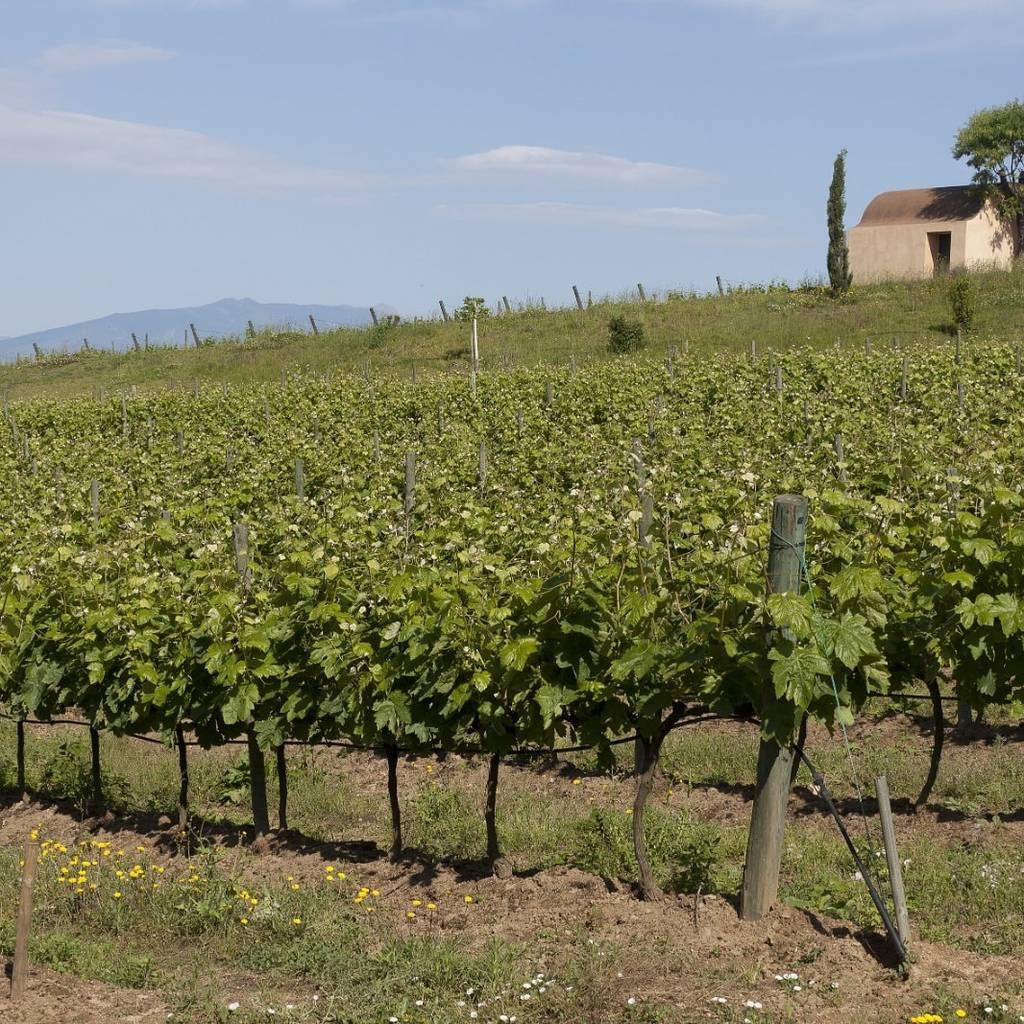- Visita viñedo en el portal de la Costa Brava
