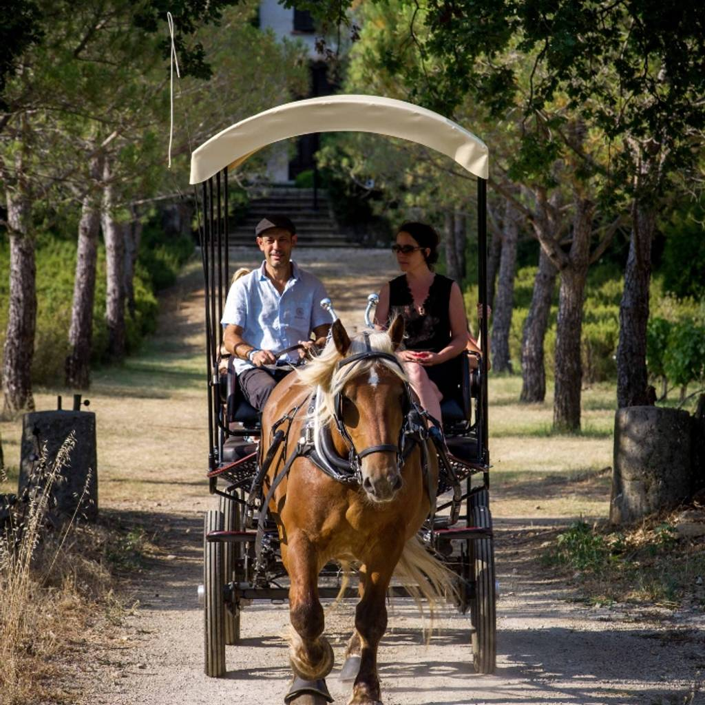 Discover the domaine and the sculpture park in a horse-drawn carriage
