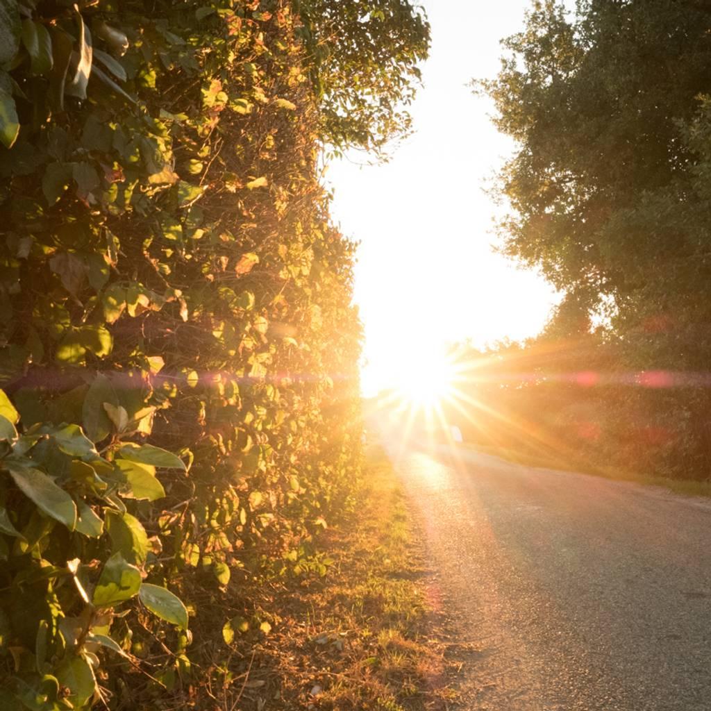 Electric bike ride through the vineyard