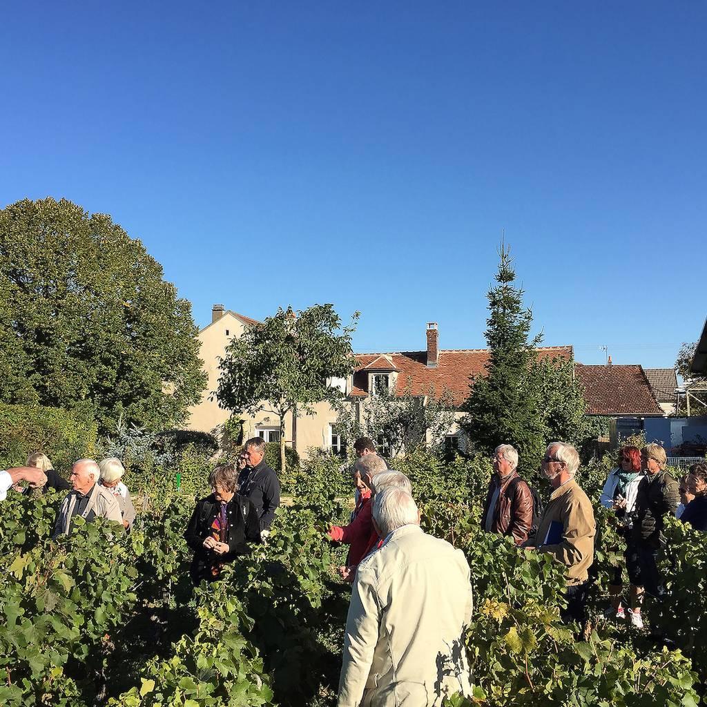 - Visit and Wine tasting Chablis