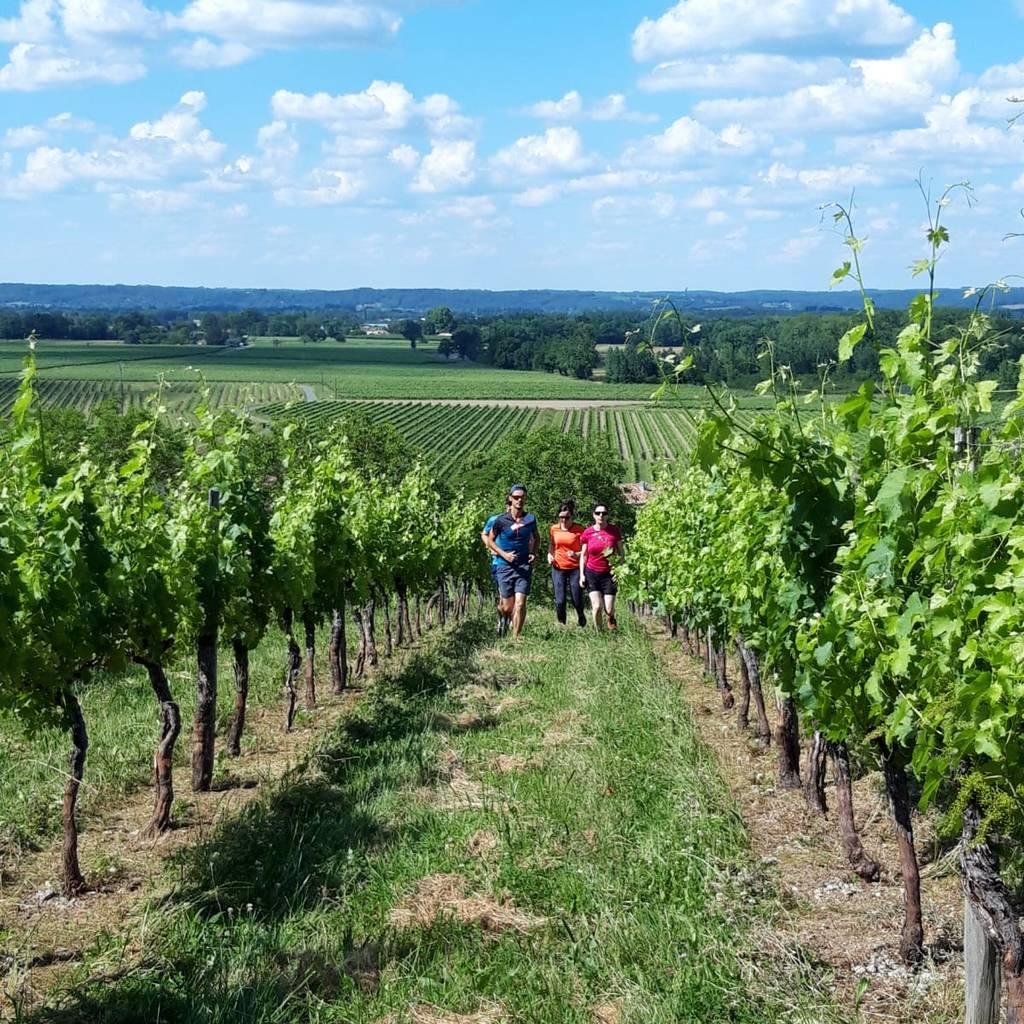 - Run Into the wine, the wine running trail