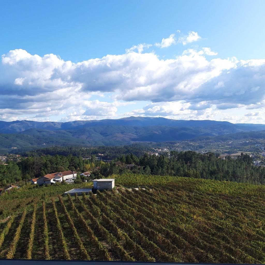 - Premium Wine Tasting at Quinta de Santa Cristina - Vinho Verde