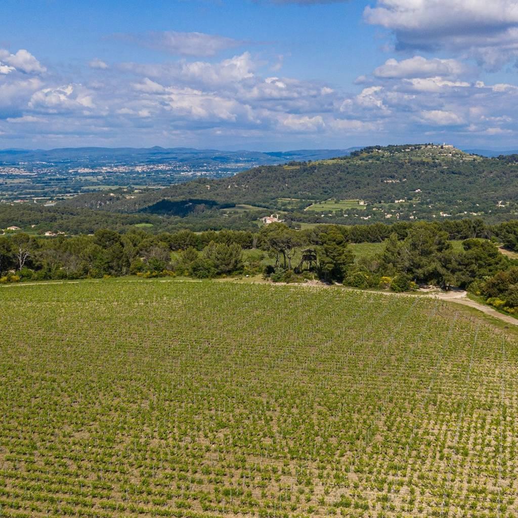 - Pique-Nique dans les vignes le 18, 19 et 20 juin
