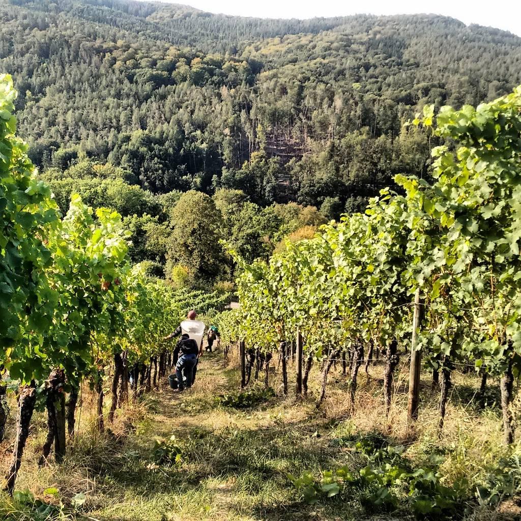 - Vineyard Walk & Winery Visit in Franken Region