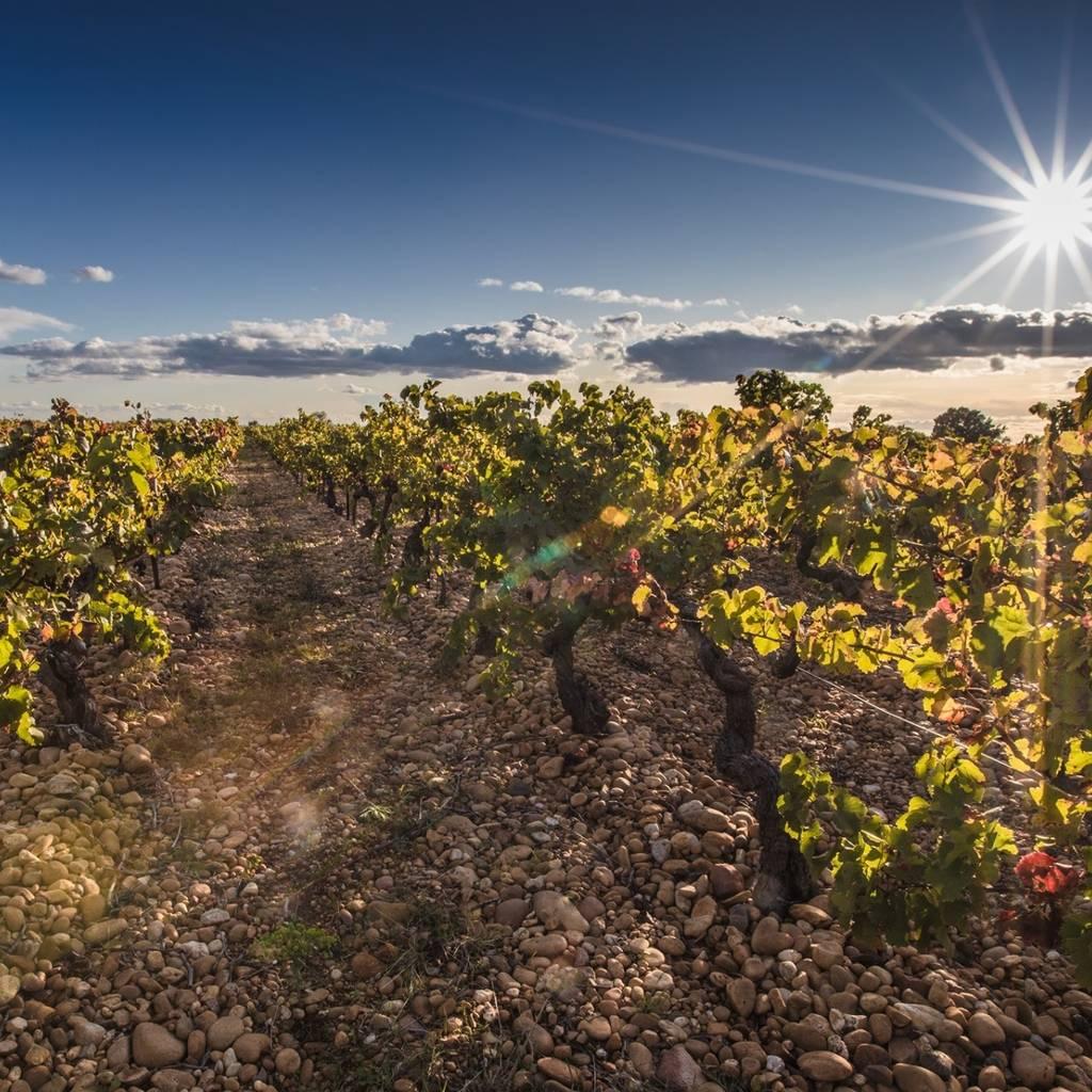 Balade vigneronne : à la découverte du terroir de l'AOC Signargues