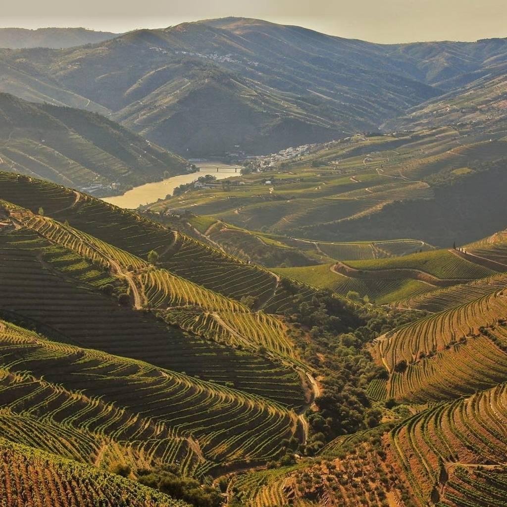 Vale do Douro: Degustação de Vinhos, Passeio de Barco e Almoço
