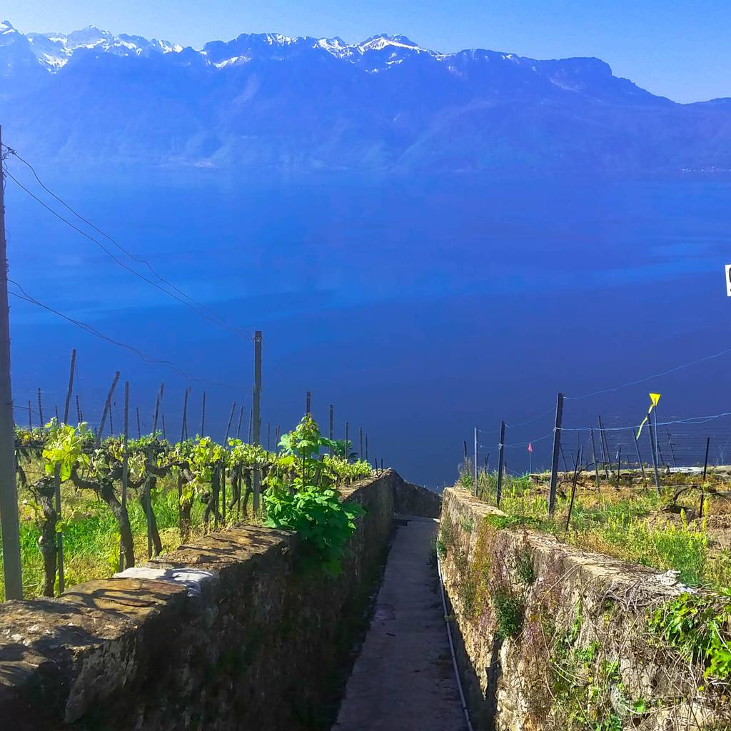 - Lavaux Vineyard Terraces - UNESCO Heritage