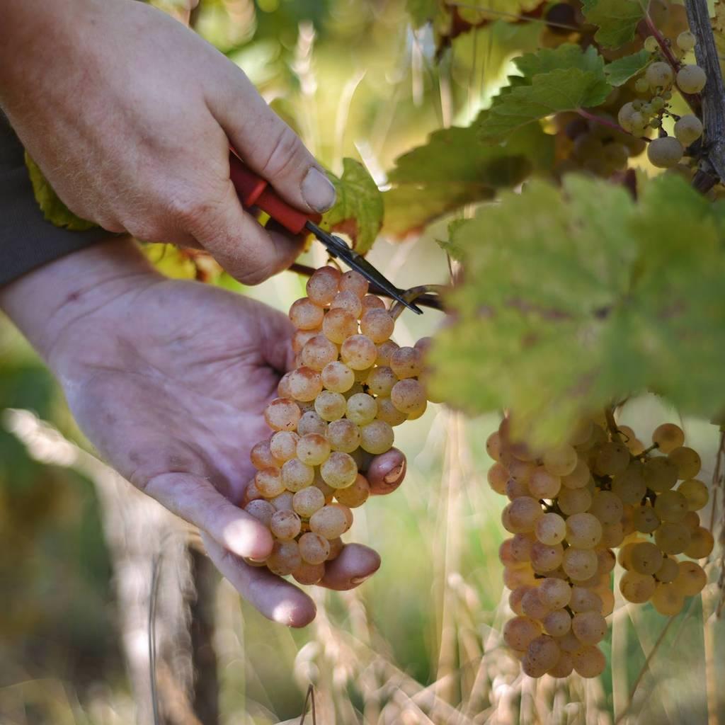 - Découvrez le casse-croûte du vigneron