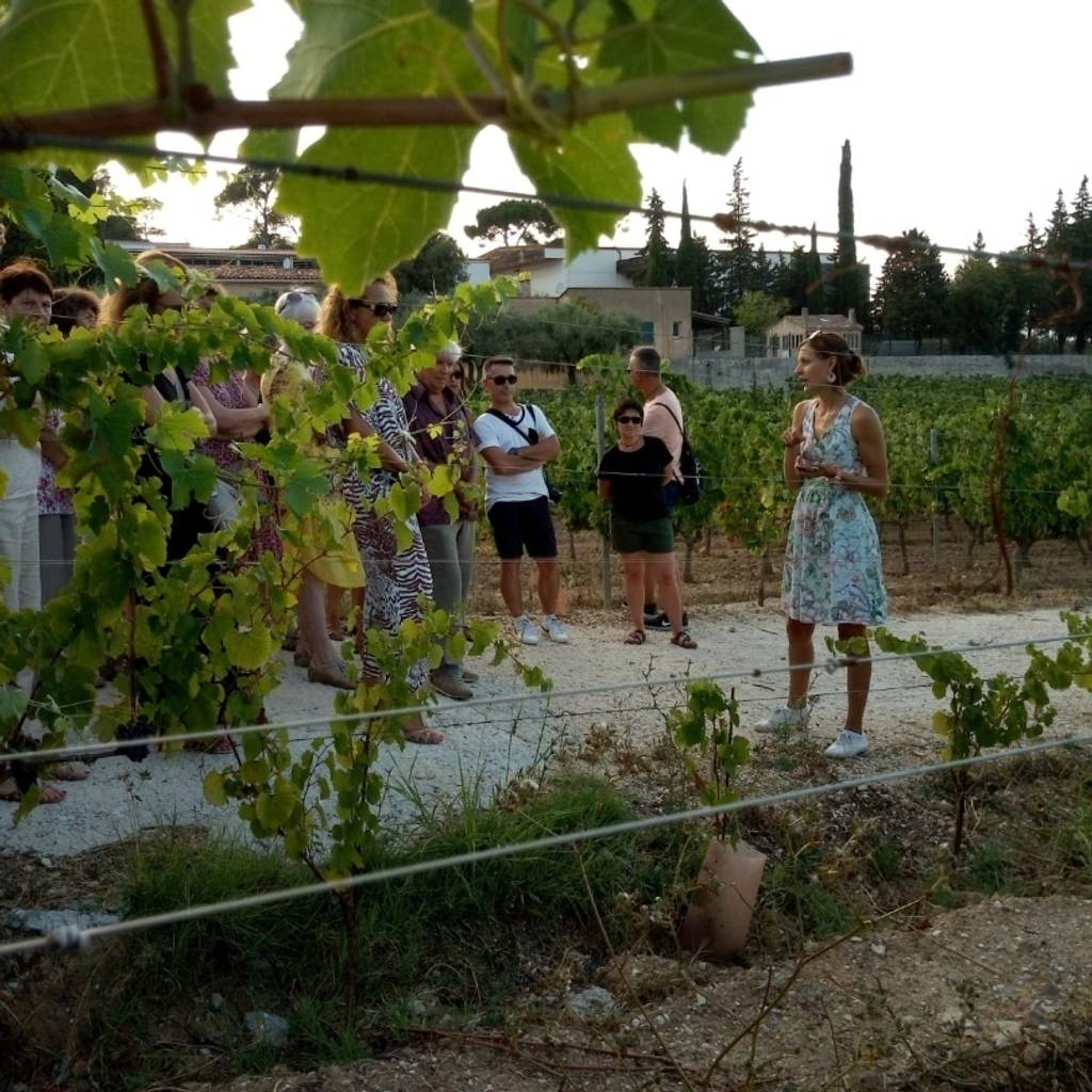 Discovery of a biodynamic wine estate (« Visite oenoludique »)