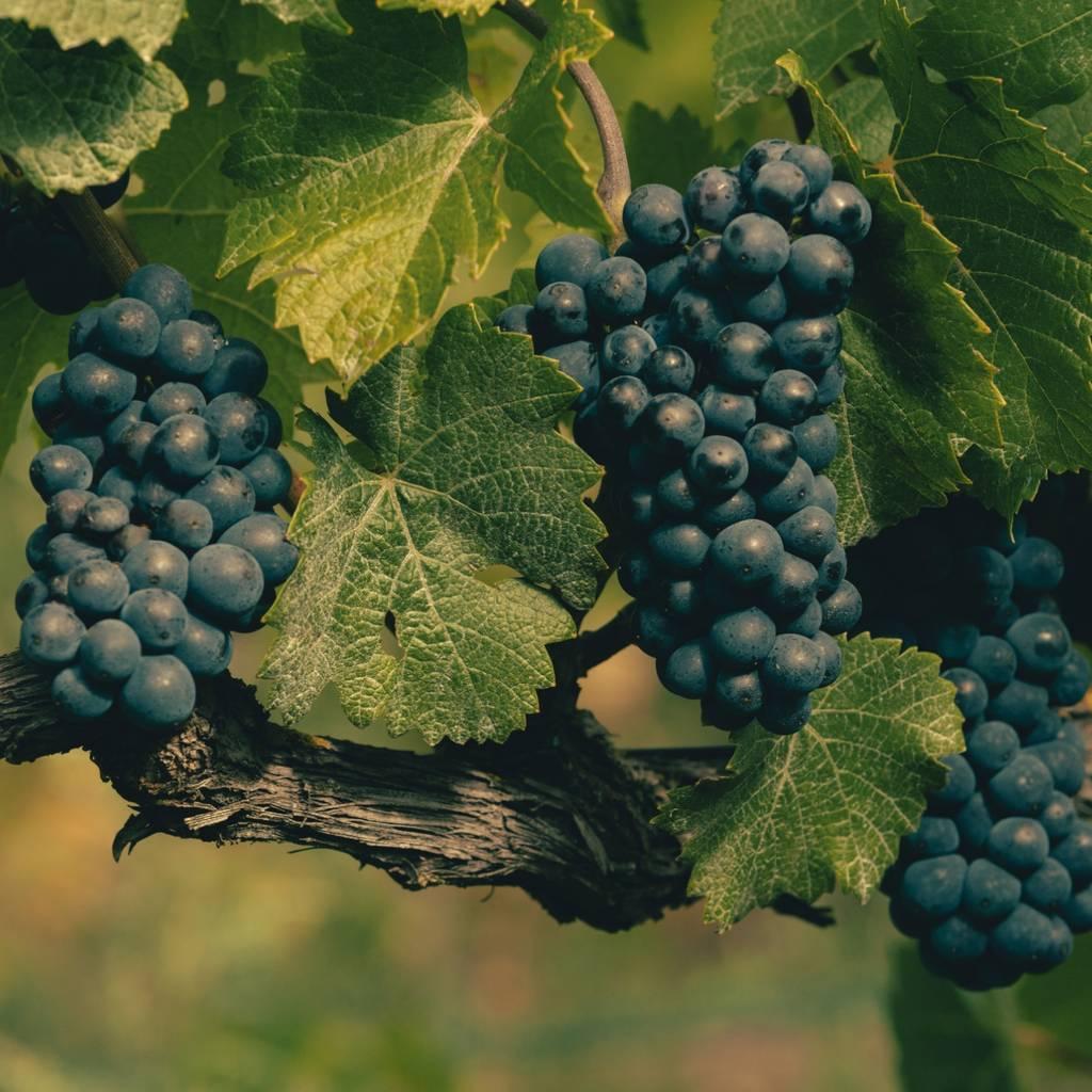Från land till vin (till fots)