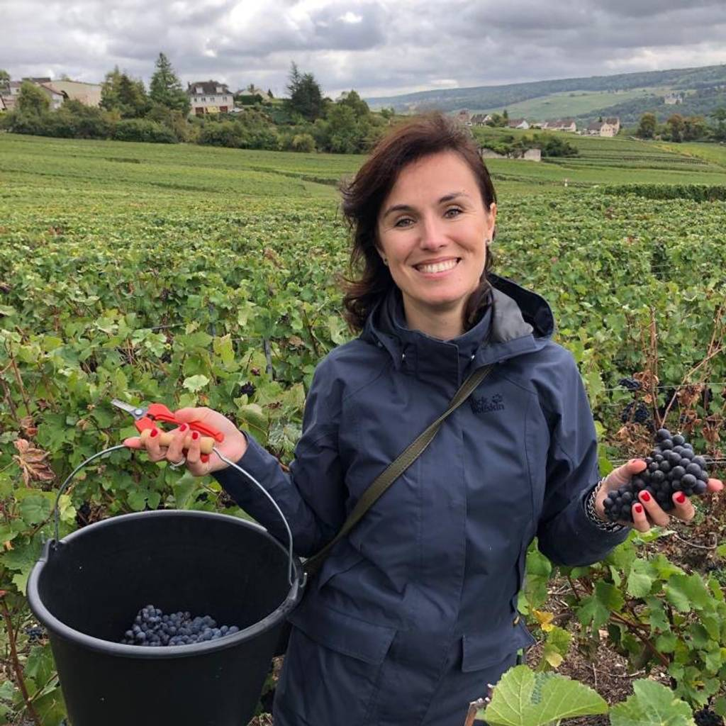 Winemaker for a day, from the vineyard to the cellar